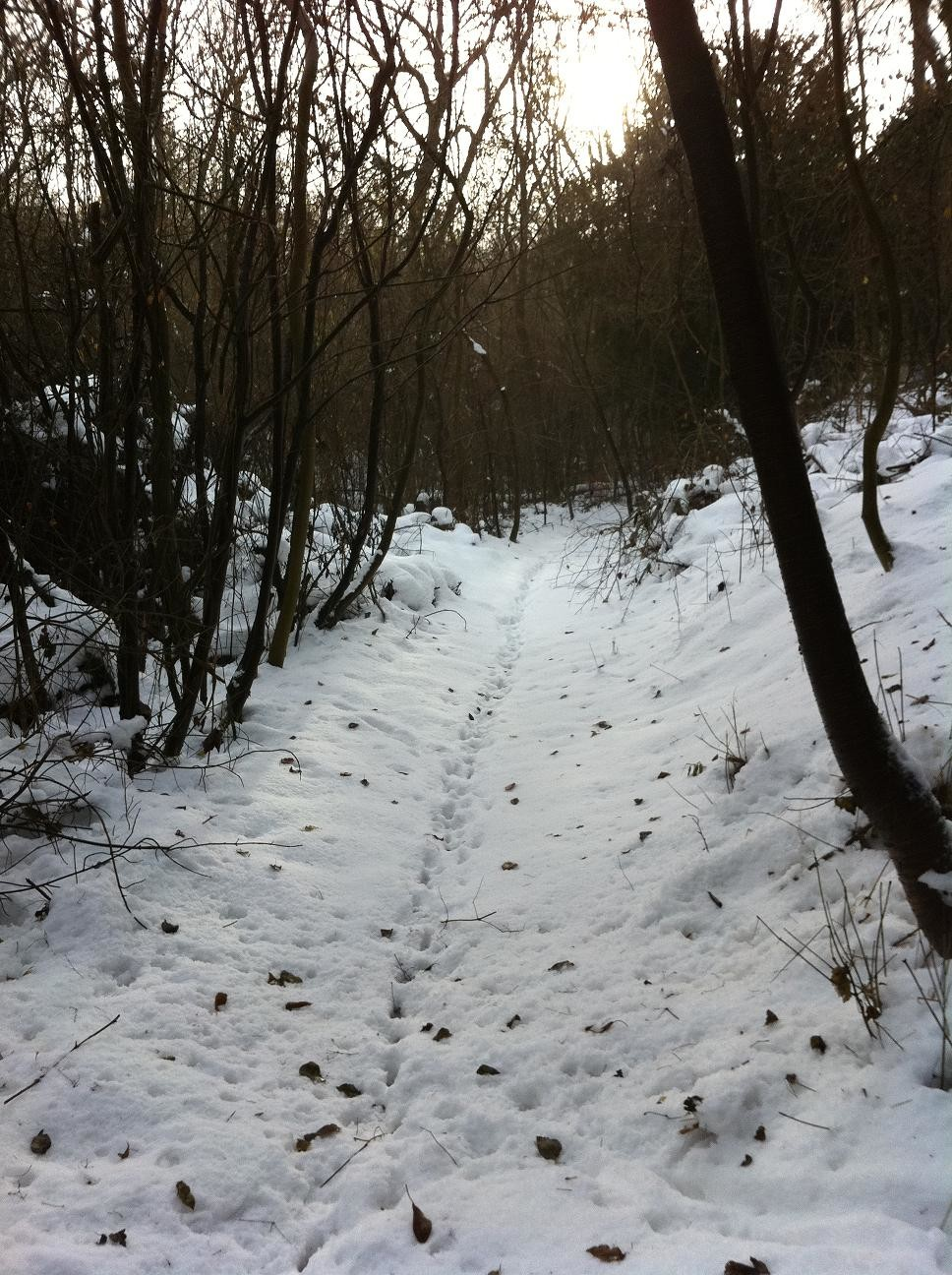 Skiing in the North Downs 1