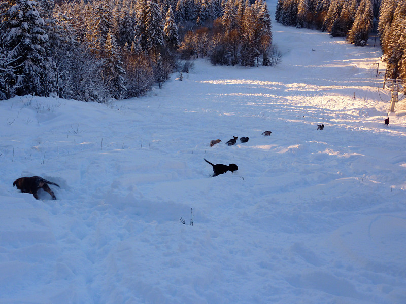 Classe de neige pour une chienne et ses 6 chiots
