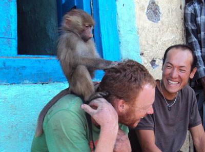 cheeky monkey, Kenya