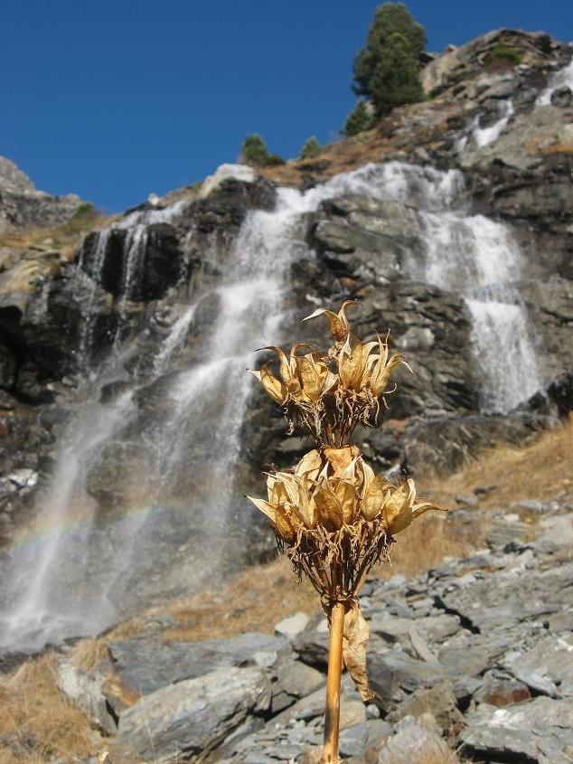 Fleur séchée sur fond de cascade