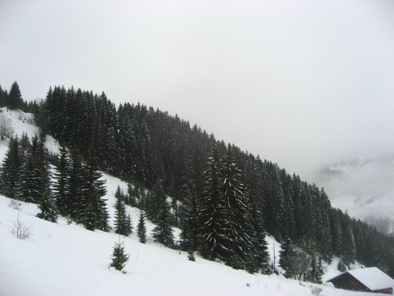plus de neige sur les sapins