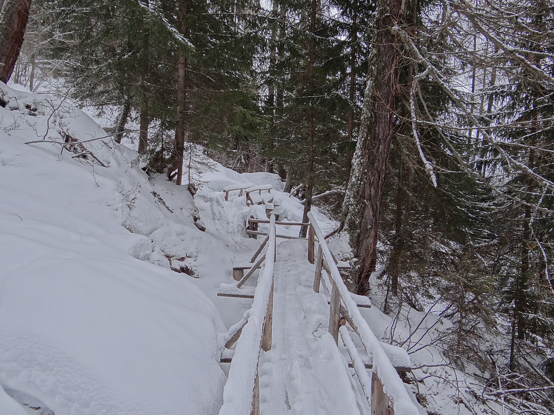 Peu de neige en sous bois