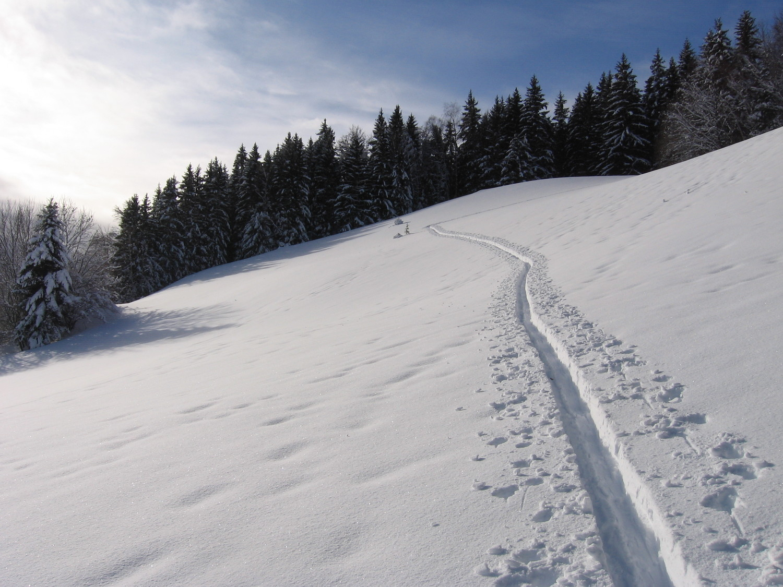 Chartreuse : montée au col du Baure , puis longue traversée en forêt vers le Col du Coq