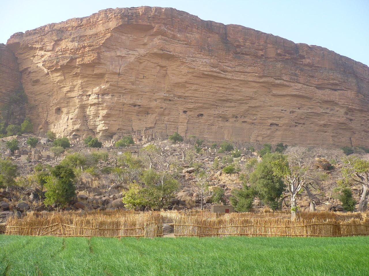 chamsp d'oignons et la falaise de Bandiagara