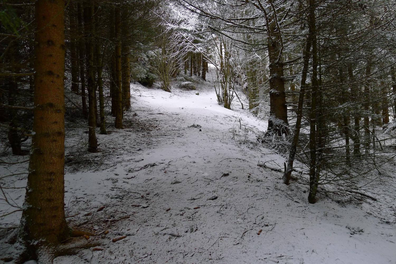 Passage en forêt peu enneigé