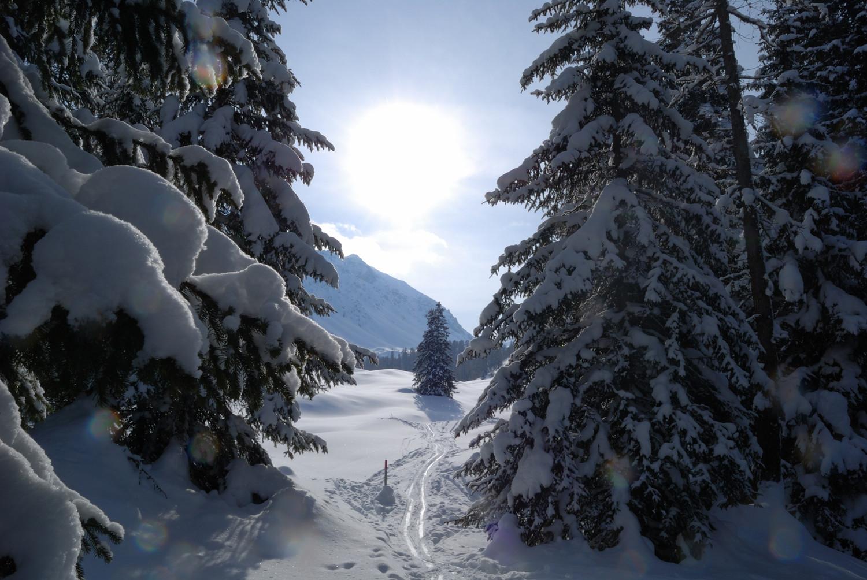 All'ingresso del bosco appena sotto Munter a 1900 m circa