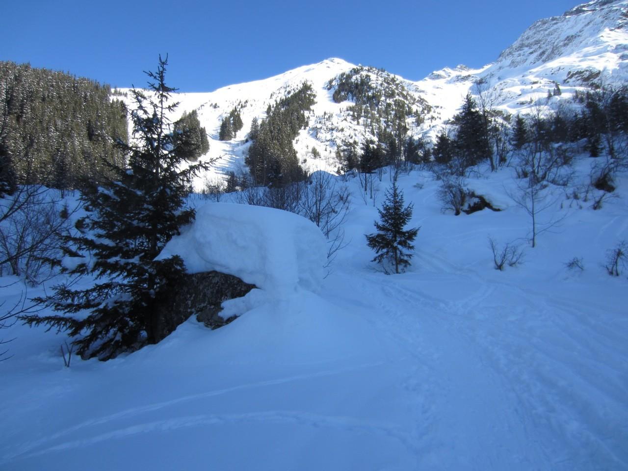 sortie de la forêt vers 1600m, la neige ne manque pas encore