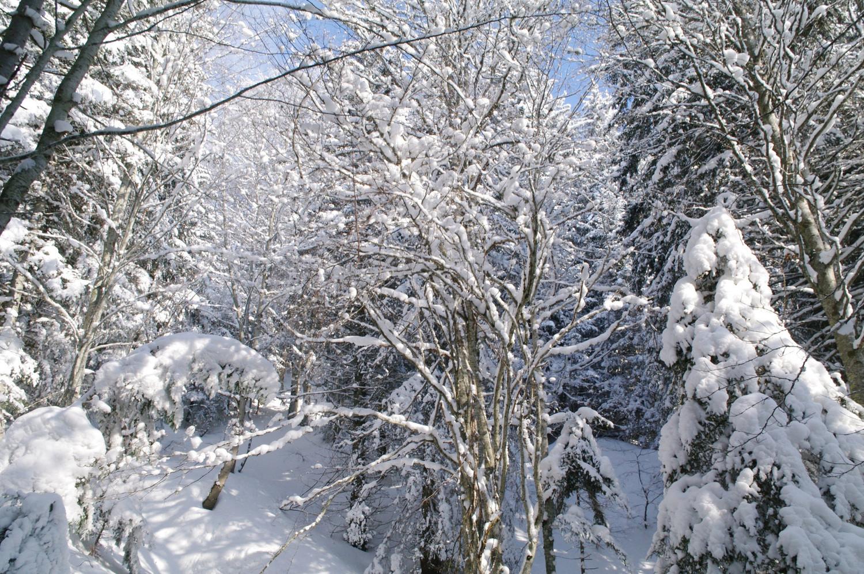 Forêt chartrousine