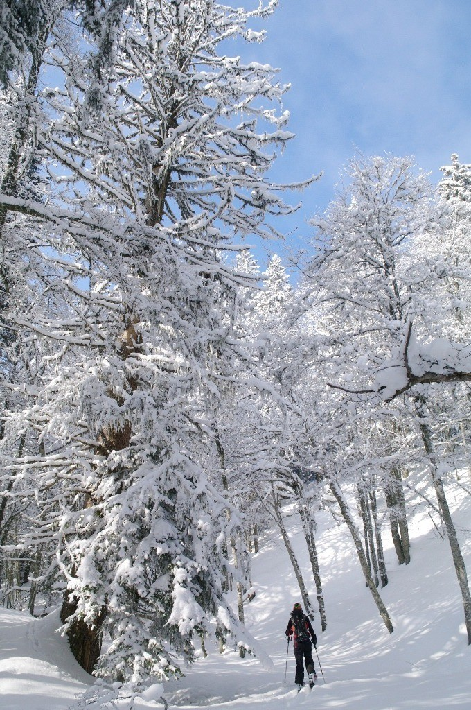 Forêt chartrousine - 2