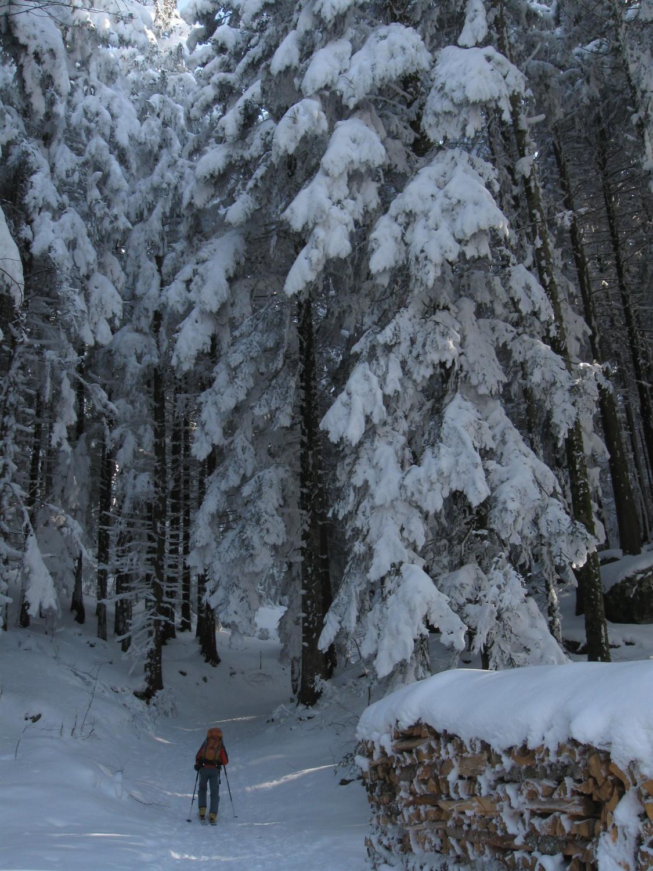 nel bosco freddo e innevato