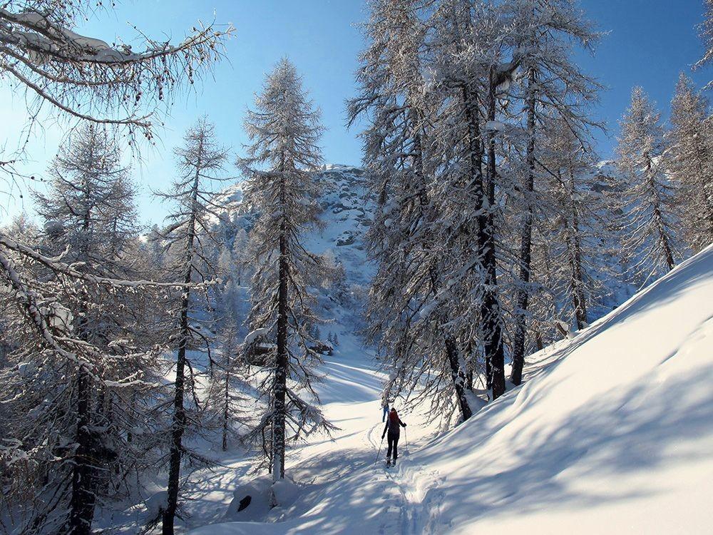 Muttans; uscendo dal bosco all'Alp Miez.