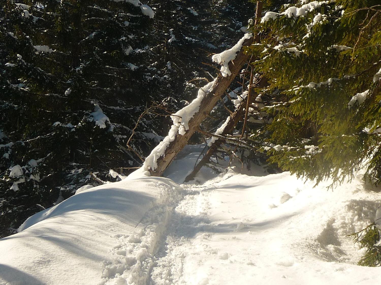 beaucoup d'arbres tombés
