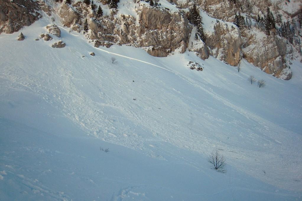 Avalanche Bovinant