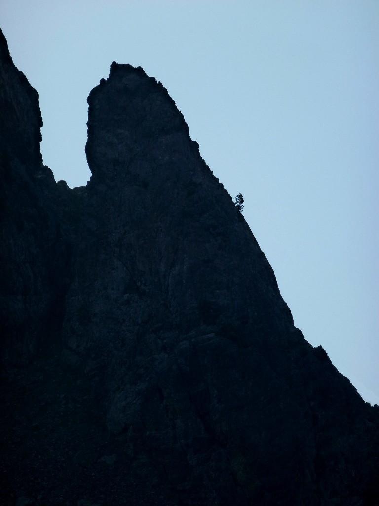 Un grimpeur dans le vent ? Un sapin ?