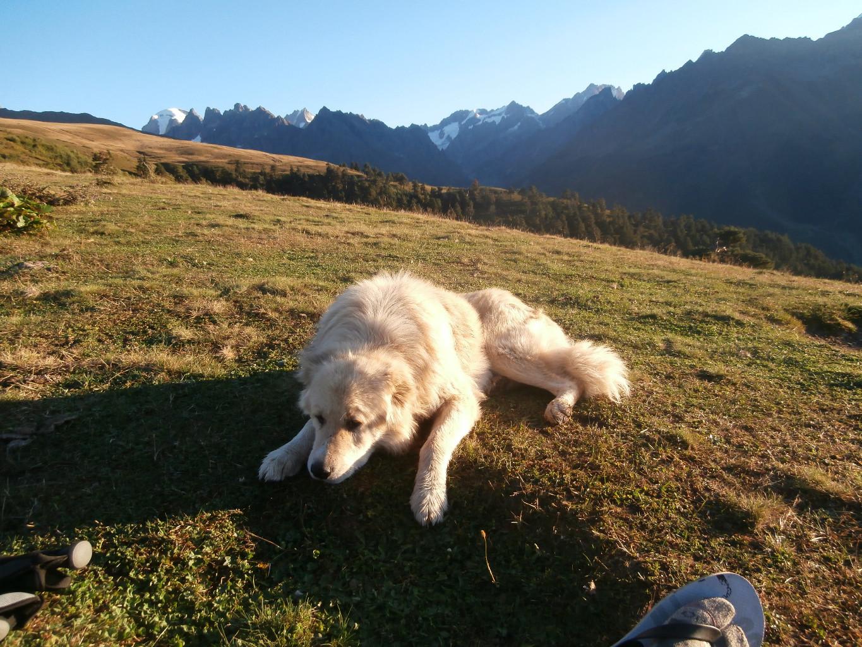 Si tous les chiens de berger pouvaient être aussi cool que celui-ci.