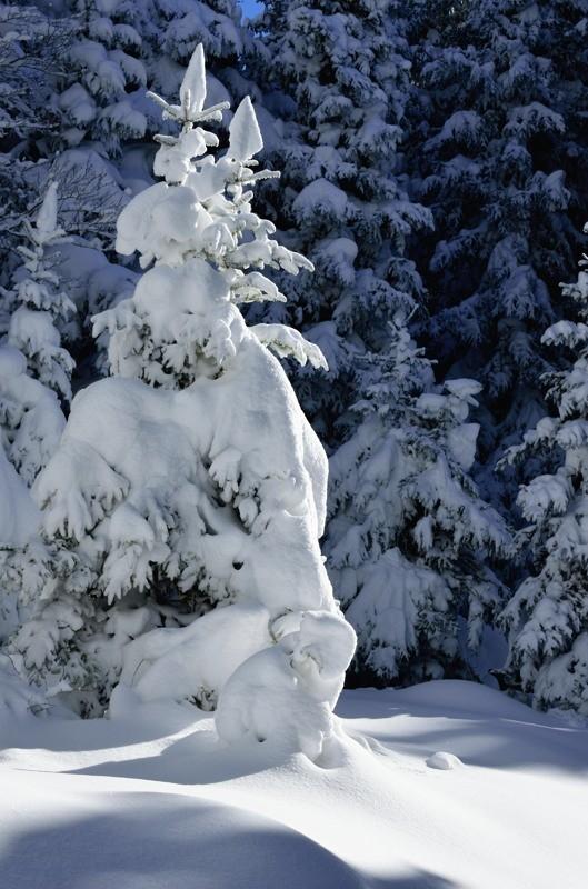 Sculptures de neige