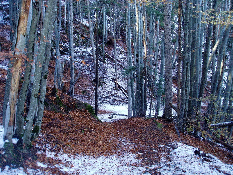 La Combasse - Tapissé de feuilles