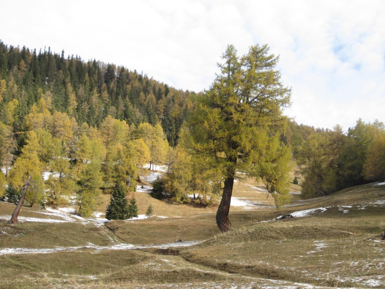 Oberwald ( sous Oberu)