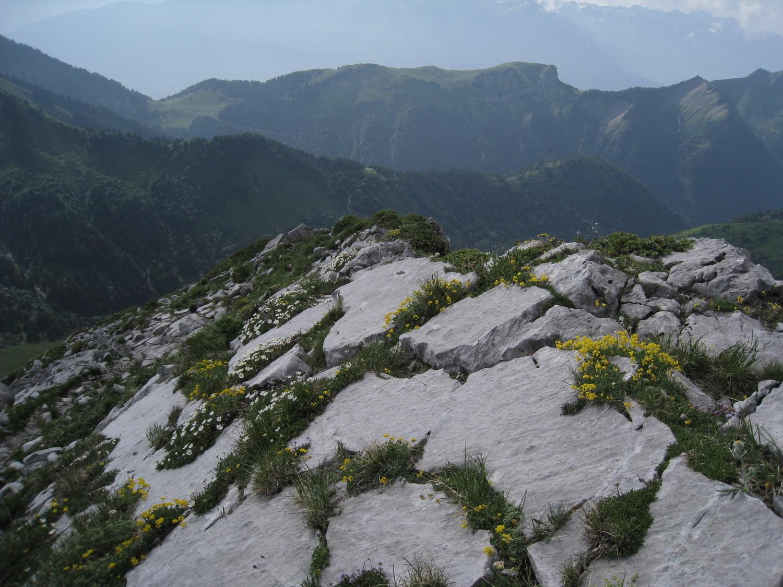 Arcalod - descente  sur des rocailles fleuries
