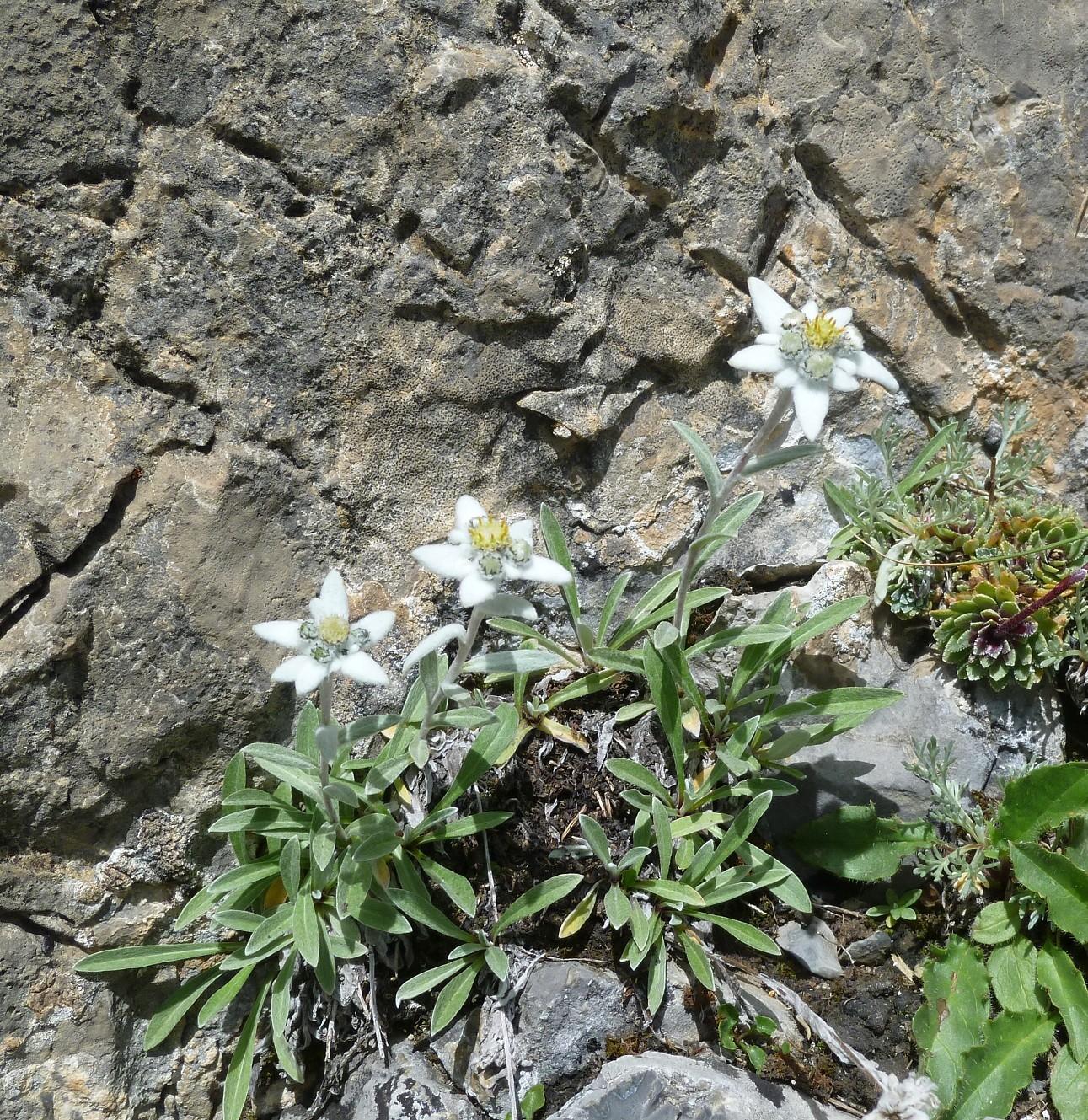 petites fleurs dans L5