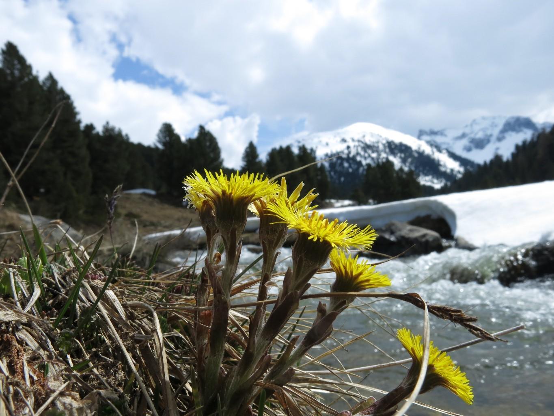 Adieu le Val S-Charl