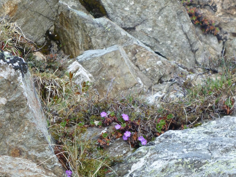 Fleurs sur Orionde