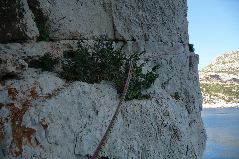 Gabian dans son nid (L3) (Bora-Bora)