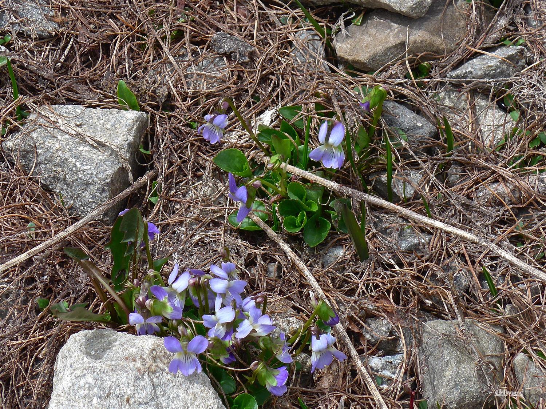 Le printemps prend ses marques.