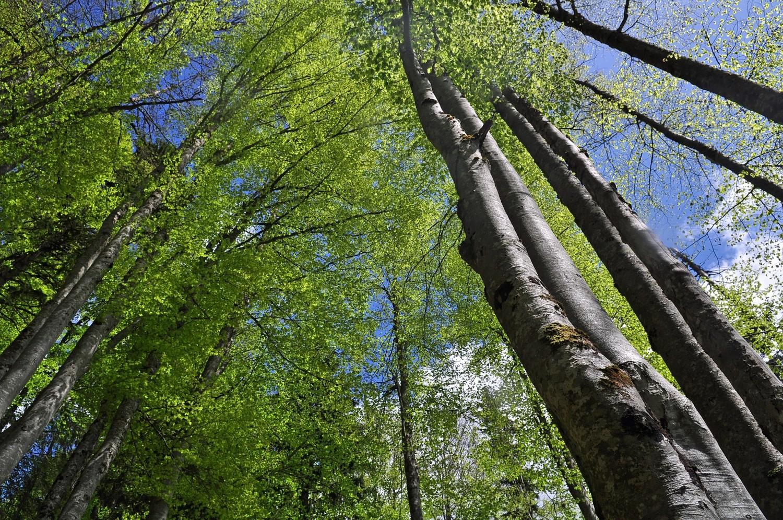La Nature est un temple où de vivants piliers