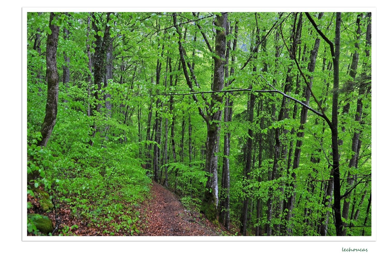 vert cru après les pluies