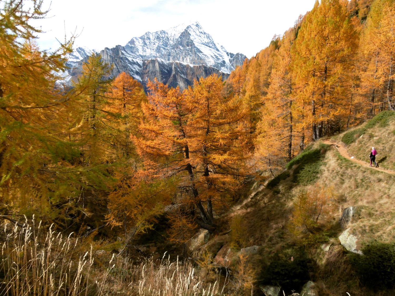 Traversée Alpe Ciamporino - Alpe Veglia