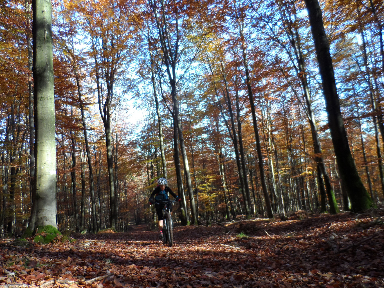Belle forêt avec encore des senteurs