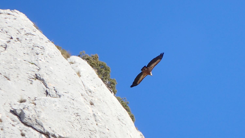 Les vautours...