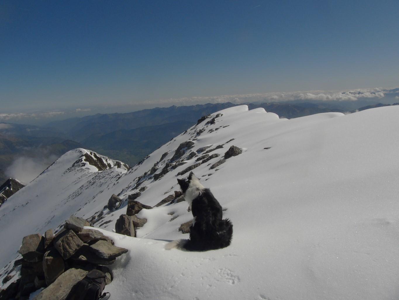 Goofy au sommet, dominant la vallée d'Aure.