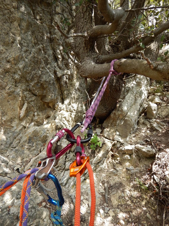 relai sur arbre avant la derniere longeur