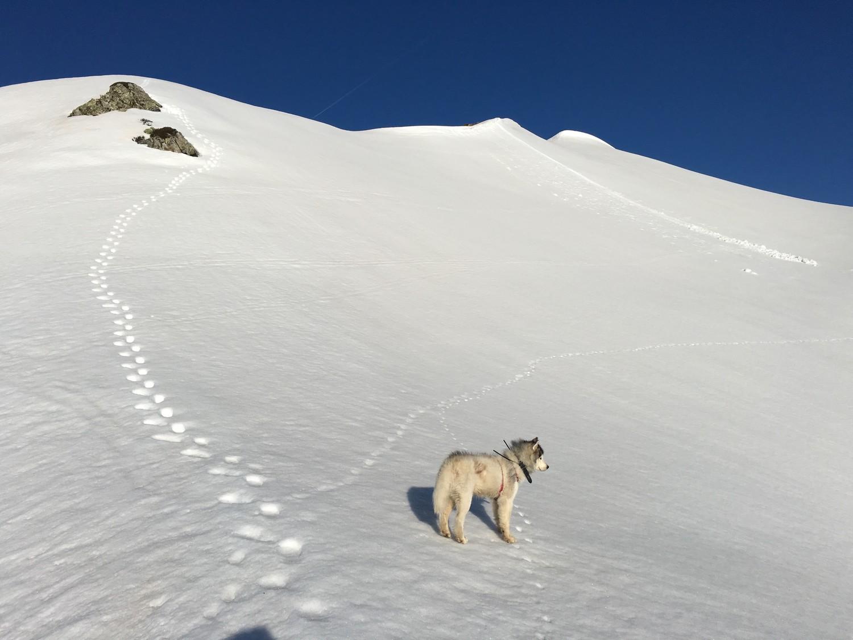 En approche du sommet