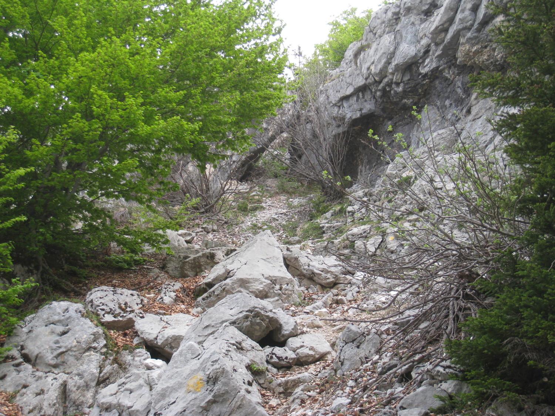 à la sortie du forêt - Mt Lachat