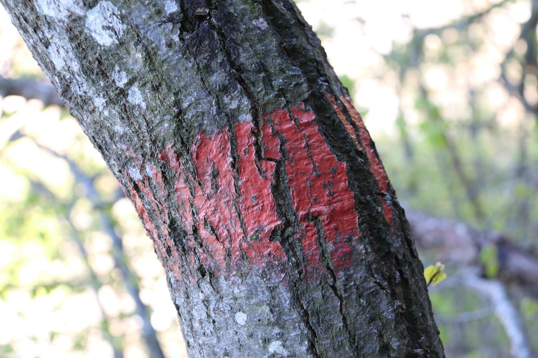 bien suivre les marques rouge